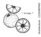 orange fruit drawing... | Shutterstock .eps vector #1220380960