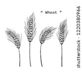 wheat drawing illustration by... | Shutterstock .eps vector #1220380966