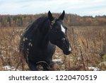 beautiful black stallion with... | Shutterstock . vector #1220470519