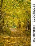 golden fall. norway maple  acer ... | Shutterstock . vector #1220502283