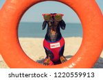 A Dog Dachshund Breed  Black...
