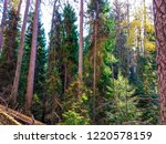 wilderness forest trees view.... | Shutterstock . vector #1220578159
