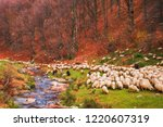flock of sheep and donkeys on... | Shutterstock . vector #1220607319