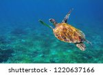 sea turtle in ocean closeup.... | Shutterstock . vector #1220637166
