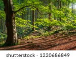 a magical sunlit beech tree... | Shutterstock . vector #1220686849