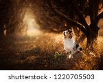 dog on the footpath. mystical... | Shutterstock . vector #1220705503