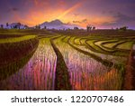 morning sunrise at paddy fields ... | Shutterstock . vector #1220707486