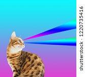queen cat collage  pop art...   Shutterstock . vector #1220735416