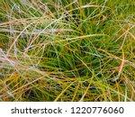 grass closeup   ... | Shutterstock . vector #1220776060