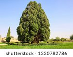 cypress of abarkooh or known as ... | Shutterstock . vector #1220782786