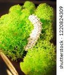 reptile food   caterpillar for... | Shutterstock . vector #1220824309