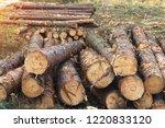 fighting beetle bark beetles ... | Shutterstock . vector #1220833120