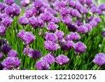 chives allium schoenoprasum  in ...   Shutterstock . vector #1221020176
