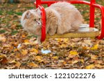 big fluffy red cat sitting on a ...   Shutterstock . vector #1221022276