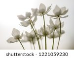 narcissus anemone  anemone...   Shutterstock . vector #1221059230