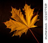 autumn yellow maple leaf on a... | Shutterstock . vector #1221077539