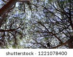 silhouette of the intertwining...   Shutterstock . vector #1221078400