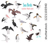 Different Sea Birds Color Flat...