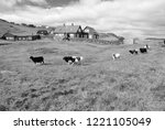 flock of sheep on pasture in... | Shutterstock . vector #1221105049