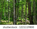 the trunks of large beech... | Shutterstock . vector #1221119800