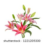 beautiful pink lily flower... | Shutterstock . vector #1221205330