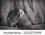 Barn Owl In Black And White
