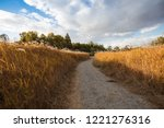 path between autumn reed fields  | Shutterstock . vector #1221276316