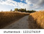 path between autumn reed fields  | Shutterstock . vector #1221276319