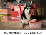 dog under the christmas tree at ...   Shutterstock . vector #1221307609