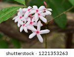 colorful flowers.group of...   Shutterstock . vector #1221353263