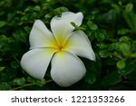 colorful flowers.group of...   Shutterstock . vector #1221353266