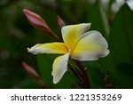 colorful flowers.group of...   Shutterstock . vector #1221353269