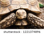 Stock photo front view close up african spurred tortoise resting in the garden it s the third largest 1221374896