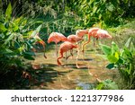 Pink Flamingoes Animals Zoo Concept - Fine Art prints