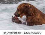 grizzly bear in alaska katmai... | Shutterstock . vector #1221406390