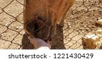 the horse eats from my hand   Shutterstock . vector #1221430429
