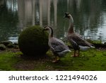 Two Geese Near The Pond In The...