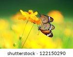 Two Butterfly On Orange Flower...