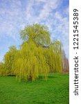 weeping willow  salix x...   Shutterstock . vector #1221545389