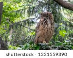 Stock photo indian eagle owl also called rock eagle owl or bengal eagle owl bubo bengalensis it is a 1221559390