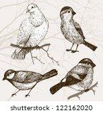 Bird Collection   Sparrow ...