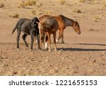 a black and a brown mustang... | Shutterstock . vector #1221655153