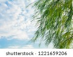 branches of weeping willow tree ... | Shutterstock . vector #1221659206