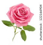 beautiful pink rose with leaves ... | Shutterstock . vector #122166904