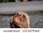 oriental garden lizard  eastern ... | Shutterstock . vector #1221679363