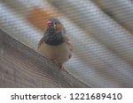 zebra finch perched | Shutterstock . vector #1221689410