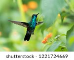 a male  blue chinned sapphire... | Shutterstock . vector #1221724669