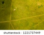 aerial view of cows on green...   Shutterstock . vector #1221737449