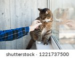 tabby cat is nuzzling the human'... | Shutterstock . vector #1221737500