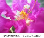 colorful flowers  beautiful... | Shutterstock . vector #1221746380
